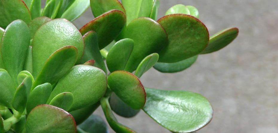 این گیاه خانهتان را پر از انرژی مثبت میکند